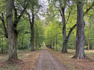 Foto der Lindenallee im Lenné-Park Görlsdorf