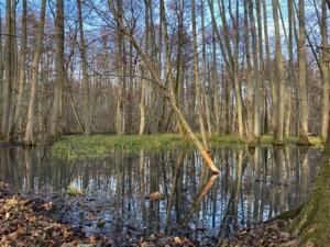 Erlbruch im Lenné-Park Görlsdorf, Foto: Parkverein